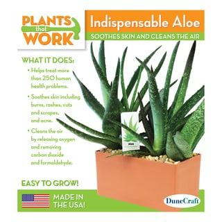 Indispensable Aloe Plant Kit