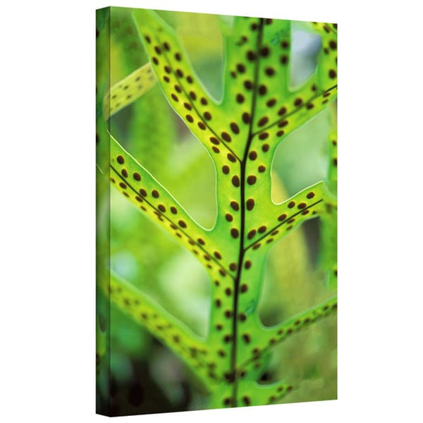 Art Wall Kathy Yates 'Hawaiian Laua'e Fern' Gallery-Wrapped Canvas