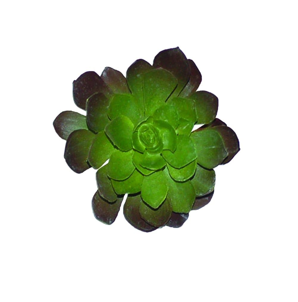 4.5-inch Purple/ Green Echeveria Succulent (Pack of 12)