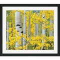 Dennis Frates 'Glorious Yellow Aspens' Framed Art Print