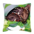 Polydamas Swallowtail Butterfly Close-up 18-inch Velour Throw Pillow