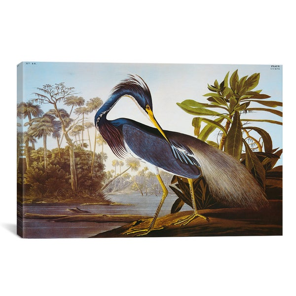 Louisiana Heron From 'Birds of America' by John James Audubon Canvas Print Wall Art