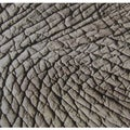 African Elephant Skin Modern Ceramic Wall Tile (Pack of 20)