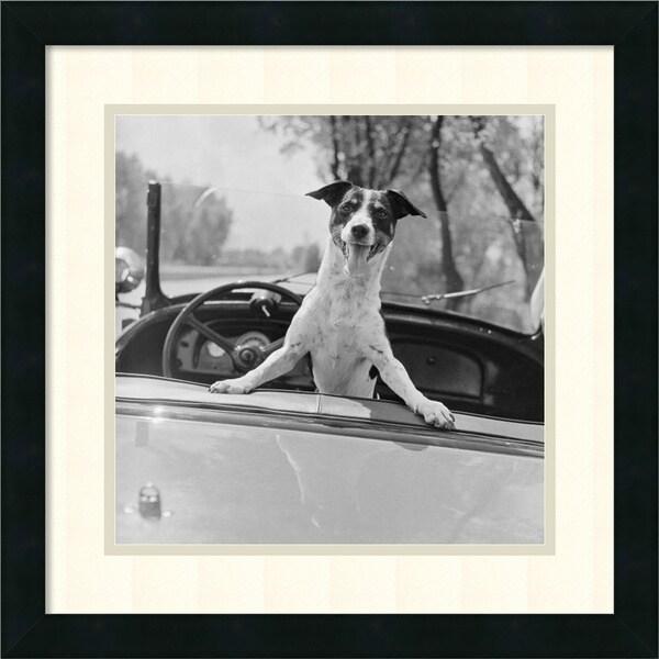 Fox Terrier in Convertible, 1953 18x18-inch Framed Art Print