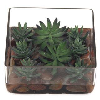 8-inch Square Glass Succulent Set