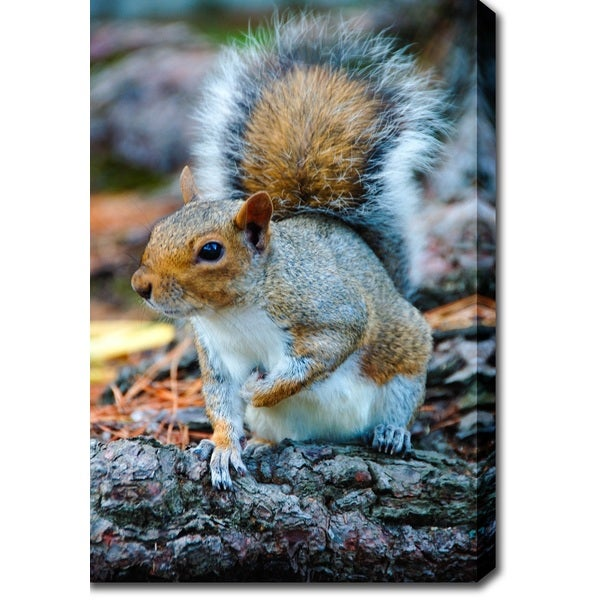 'Squirrel' Canvas Art