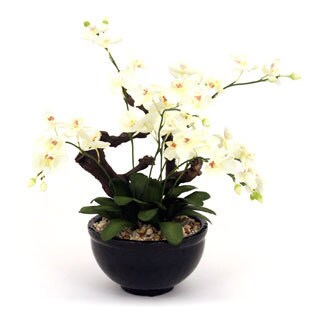 27-inch Woody Orchid Arrangement