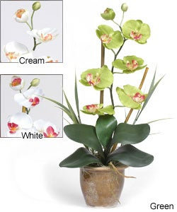 Single-stem Phalaenopsis Silk Orchid Plant