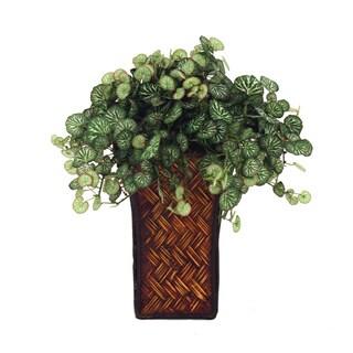 Basket Weave Vase Red Edge Saxifraga Plant