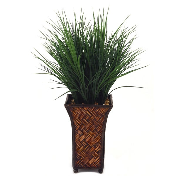 Wheat Grass Plant