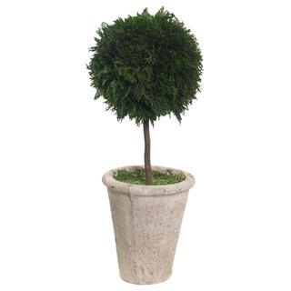 Sage & Co 15X38CM Cypress Single-ball Topiary