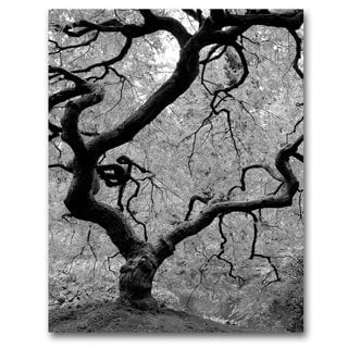 David Farley 'Japanese Tree II' Canvas Art