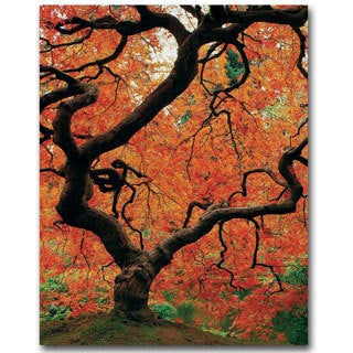 David Farley 'Japanese Tree I' Canvas Art