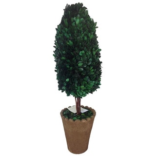 Oval-shaped Preserved Natural Boxwood with Clay Pot