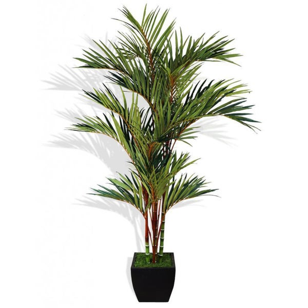 Tall 8-foot Lipstick Red Palm Tree in Container