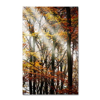 Philippe Sainte-Laudy 'Just the Light' Canvas Art