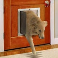 PlexiDor Performance Pet Door Large Door Mount