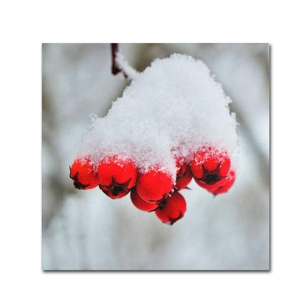 Kurt Shaffer 'Winter Berry Close-Up' Canvas Art