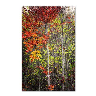 Philippe Sainte-Laudy 'Colour Touch' Canvas Art