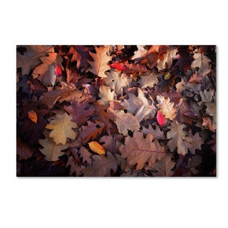 Philippe Sainte-Laudy 'Goofy Leaves' Canvas Art