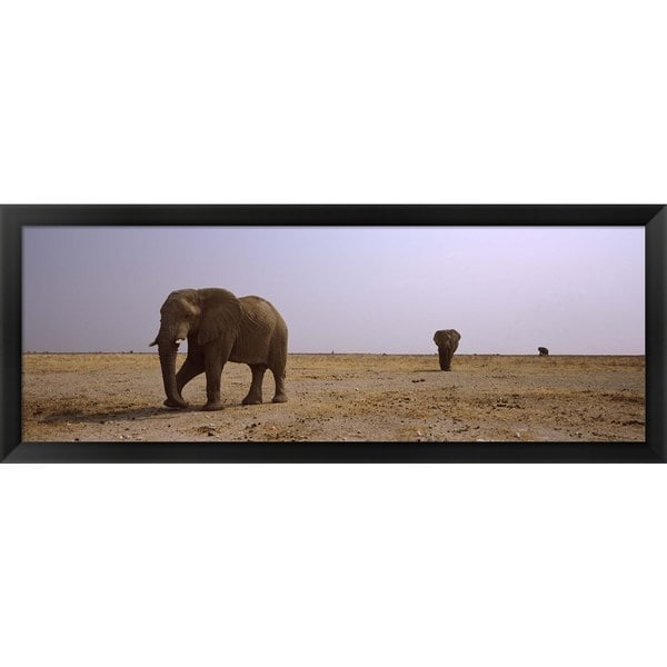 'African elephants, Etosha National Park, Namibia' Framed Panoramic Photo