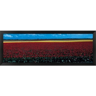 'Tulip field near Spalding Lincolnshire England' Framed Panoramic Photo