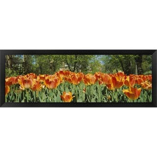 'Sherwood Gardens, Baltimore, Maryland' Framed Panoramic Photo
