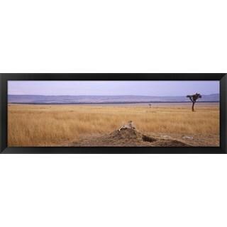 'Cheetah, Masai Mara National Reserve, Kenya' Framed Panoramic Photo