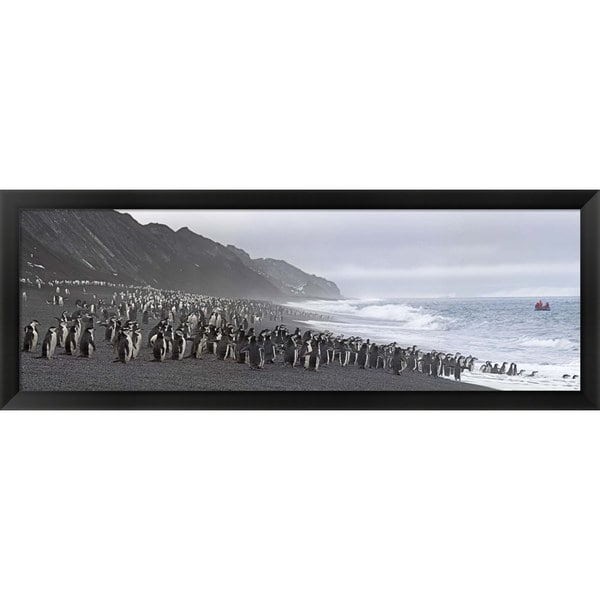 'Chinstrap penguins, Deception Island, Antarctica' Framed Panoramic Photo