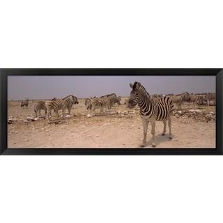 'Herd of zebras, Etosha National Park, Namibia' Framed Panoramic Photo
