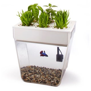 AquaFarm Self-cleaning Fish Tank That Grows Organic Food
