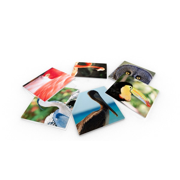 Wildlife Birds Glass Coasters (Set of 6)