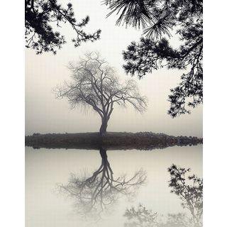 Nicholas Bell 'Winter Willow' Canvas Art