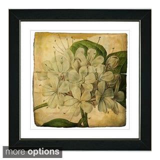 Zhee Singer 'Vintage Botanical No 47 - Antiqued' Framed Fine Art Print