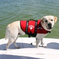 Paws Aboard Neoprene Doggy Red Life Jacket