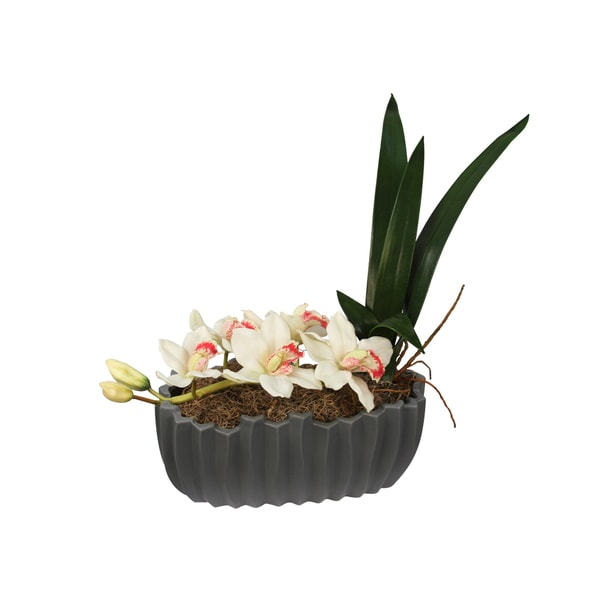 White Cymbidium Orchid and Leaves Potted Silk Arrangement