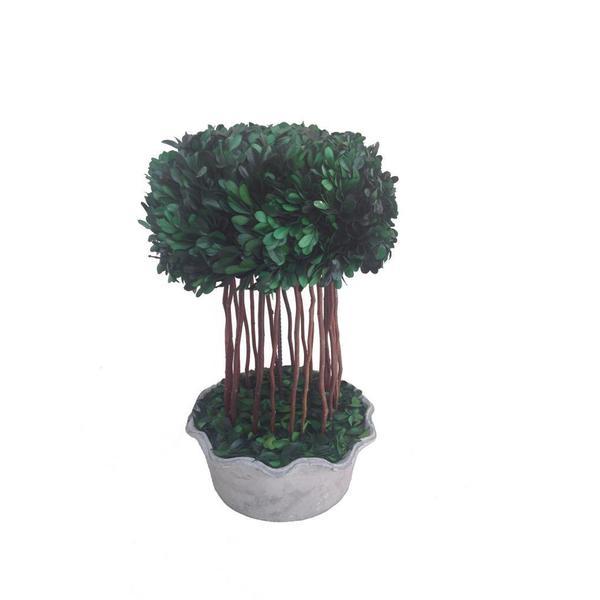 Preserved Natural Boxwood Half-ball Topiary