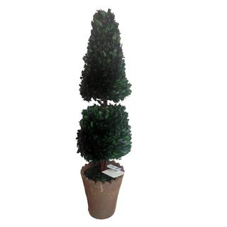 Laura Ashley Preserved Natural Boxwood 28-inch Cone Topiary