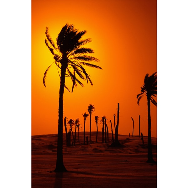 Palm Tree on Sunset' Photography Canvas Wall Art Print