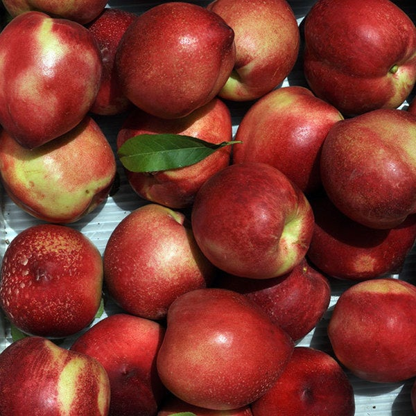 Frog Hollow Farm Organic Nectarines (3 or 5 Pounds)