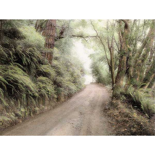 Laura Culver 'Lost Coast Road' Canvas Art