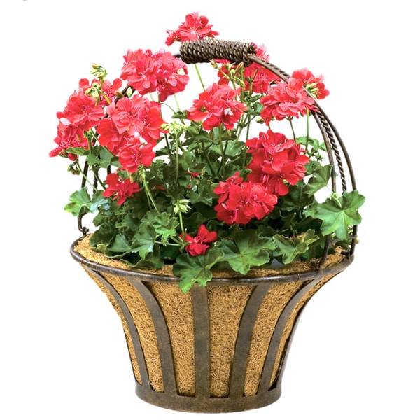 'Dragonfly' Wall Basket with Liner