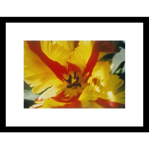 Sisse Brimberg 'A close-up of a flower' Framed Photo