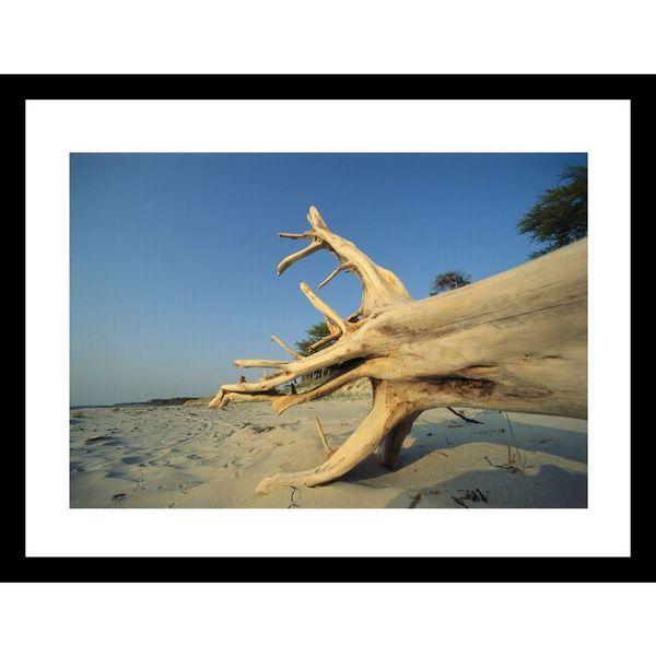 Norbert Rosing 'Driftwood on sandy beach' Framed Photo