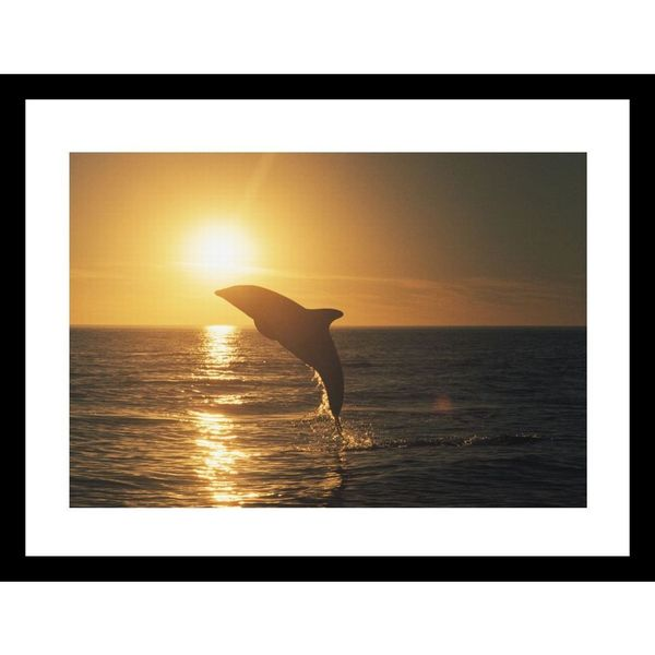 Bill Curtsinger 'A dusky dolphin leaps from the water' Framed Photo