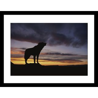 Norbert Rosing 'Howling wolf silhouetted against sunset sky' Framed Photo