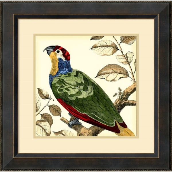 Martinet 'Tropical Parrot II' Framed Art Print 23 x 23-inch