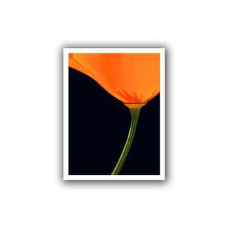 Dean Uhlinger 'Pauma Valley Poppy' Unwrapped Canvas