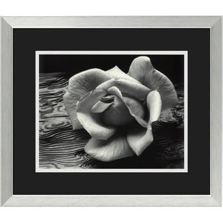 Ansel Adams 'Rose and Driftwood, San Francisco, California, 1932' Framed Art Print 22 x 19-inch