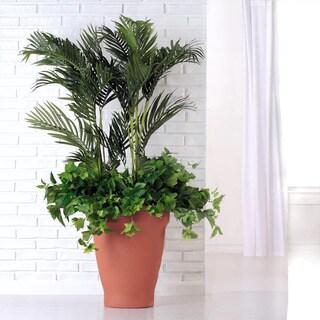 XXL Terra Cotta Planter (Indonesia)
